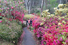 The Campbell Rhododendron Gardens