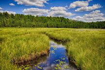 Beaver Pond Trail, Algonquin Provincial Park, Canada
