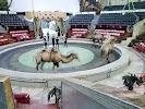 Пермский государственный цирк, улица Крупской, дом 18 на фото Перми