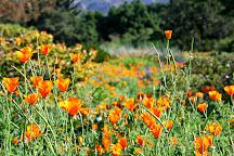Santa Barbara Botanic Garden, Santa Barbara, United States