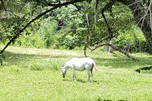 Guanacaste National Park, Belmopan, Belize