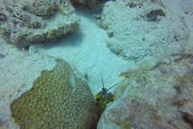 Octopus Diving Centre, Pereybere, Mauritius