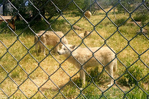 California Wolf Center, Julian, United States