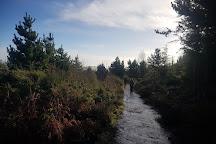 Nercwys Forest, Nercwys, United Kingdom