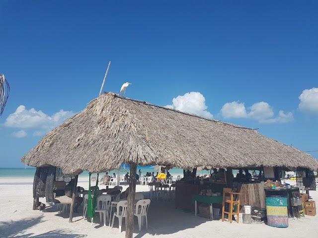 Isla Holbox Magico (Raices)