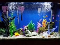 Ocean Design Aquarium chicago USA