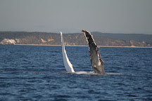 Hervey Bay Dive Centre, Urangan, Australia