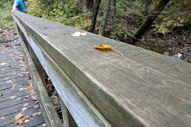 Bass Lake Trail, Ely, United States
