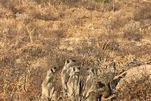 Meerkat Magic, Oudtshoorn, South Africa