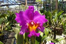 Phuket Orchid Farm, Phuket Town, Thailand