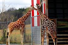 Natural Bridge Zoo, Natural Bridge, United States