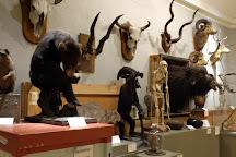 Berkshire Museum, Pittsfield, United States