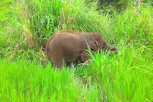 Elephant Rescue Park, Chiang Mai, Thailand