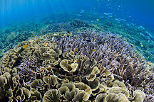 Underwater Tribe, Sanur, Indonesia