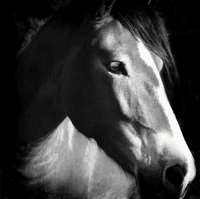 Save A Horse Thrift