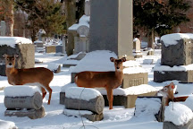 Forest Lawn, Buffalo, United States