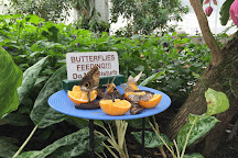 Butterfly Conservatory, Niagara Falls, Canada
