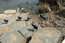 Mount Lofty Botanic Garden, Greater Adelaide, Australia