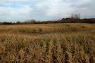 Zarpentine Farms