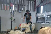 Kissane Sheep Farm, County Kerry, Ireland