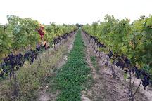 Grape Vine Tours, Kingsville, Canada