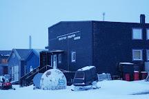 Poli Arctici, Longyearbyen, Norway