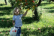 Country Apple Orchard, Harrisburg, United States