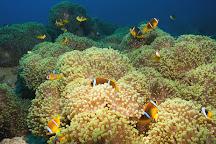Rojo Dive Safari, Hurghada, Egypt