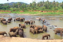 Elefantastic, Amer, India