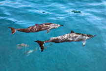 Dolphins and You, Honolulu, United States