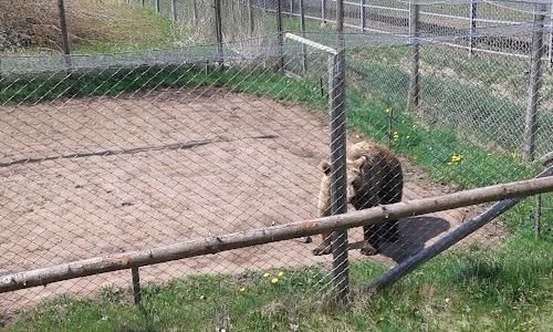 Alaveski Loomapark MTÜ