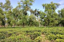 Khadimnagar National Park, Sylhet City, Bangladesh