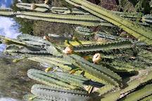 Xeriscape Botanical Gardens, Glendale, United States