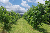 Canoelands Orchard, North Sydney, Australia