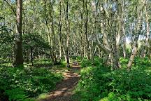 RSPB Budby South Forest, Budby, United Kingdom