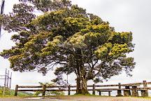 Millaa Millaa Lookout, Millaa Millaa, Australia
