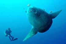 AquaMarine Diving - Bali, Kuta, Indonesia