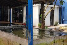 Kosgoda Sea Turtle Conservation Project, Kosgoda, Sri Lanka