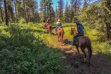 Bridle Path Quarter Horses, Hayden, United States