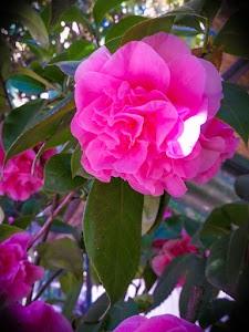 Floricoltura Radaelli