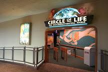 The Circle of Life, Orlando, United States