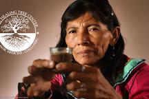 The Healing Tree Center - Ayahuasca Retreats in Cusco, Cusco, Peru