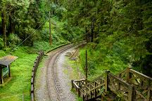 Tashan Trail, Alishan, Taiwan