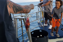 808-955 Fish, Honolulu, United States
