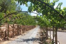 Castellroig , vinos y cavas de terrer, Subirats, Spain