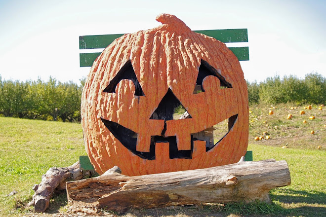 Image result for Albion Orchards Pumpkin Patch