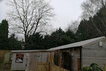 The Falconry Centre, Hagley, United Kingdom