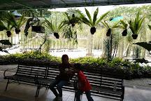 Sarawak Orchid Garden, Kuching, Malaysia