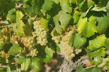 Vigne Surrau, Arzachena, Italy
