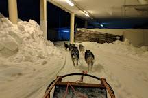 Winter wold, Helsinki, Finland